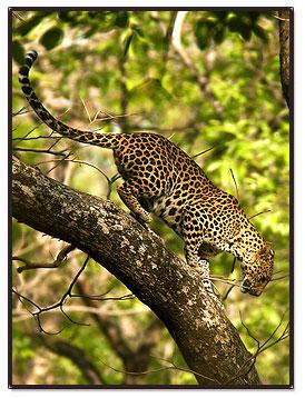 Kanha Wildlife tours, Kanha Tour Packages, Kanha National